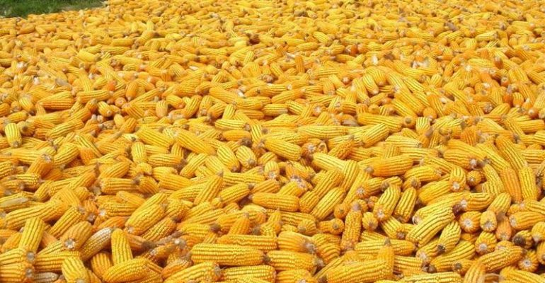 Top 50 Maize Importer Country